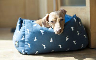 Den perfekte rejseliste når hunden skal med på rejsen