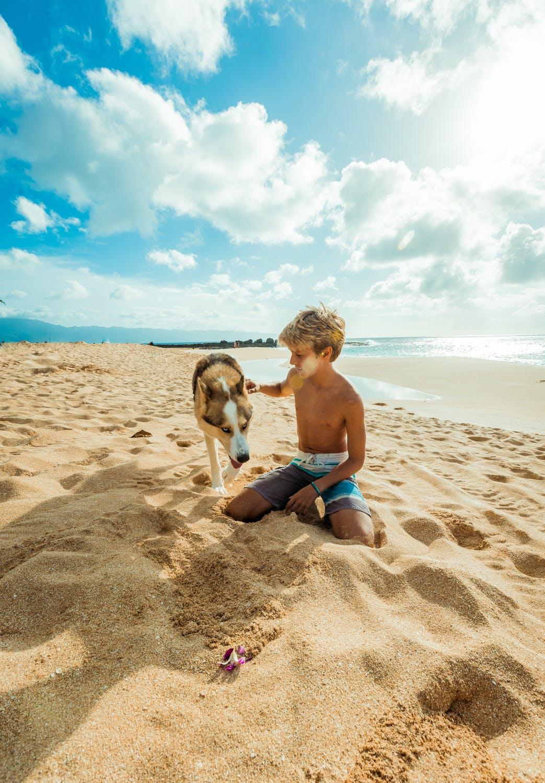 Hund på strand