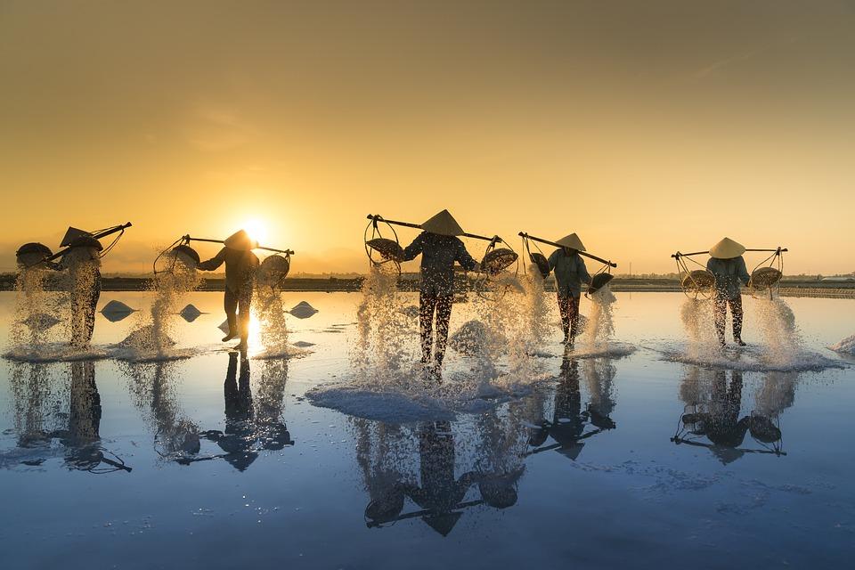Solnedgang og høst i Vietnam