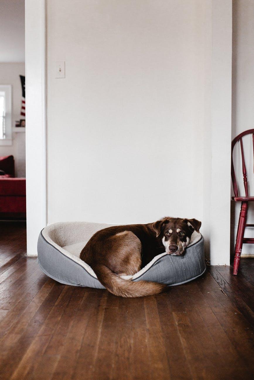 En hund i en hundeseng