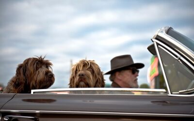 Hvordan kombinerer man bedst rejser og hund?