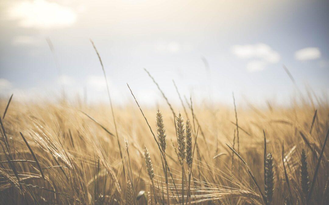 Sådan kan du forsikre dit nedlagte landbrug